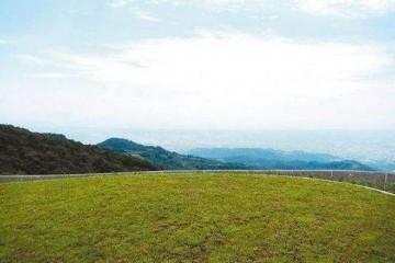 广州优质台湾草皮之台湾草常见病虫害有哪些