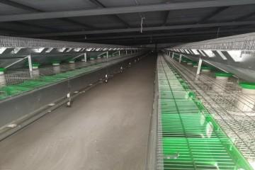 贵州兔笼厂家|剥兔皮和兔皮加工处理技术