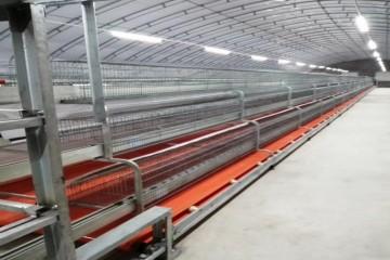 河北兔笼|欧式兔笼安装厂家