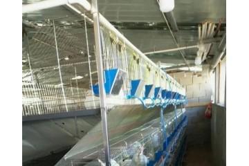兔笼批发|兔笼厂家之家兔的饲养管理技术
