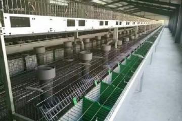 湖北2019新型兔笼厂家