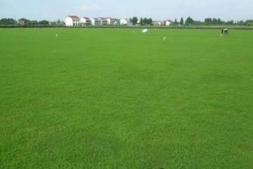 百慕大基地讲述房顶草坪的栽培