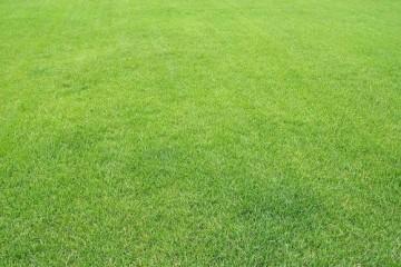 基地草坪杂草防治的基本原理和策略