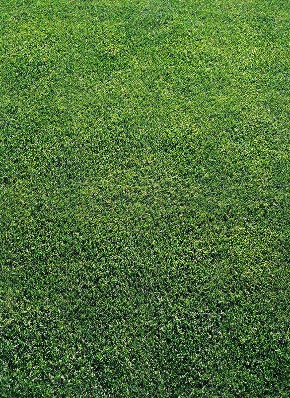 价格草种浸种快速催芽方法