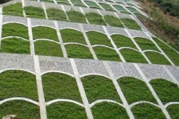 亳州多年生黑麦草种植养护方法