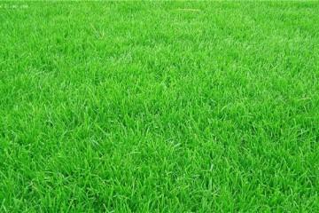 价格台湾草种植方式有哪几点?
