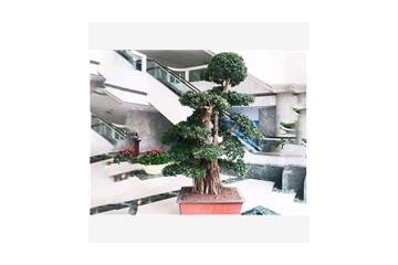 加盟酒店植物租赁哪个牌子好?上海森永室内绿植租赁