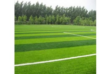 赣州哪里有草坪基地讲解什么时候给草坪浇水