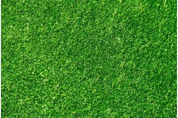 宣城哪里有草坪基地讲解什么时候适合种植草籽?