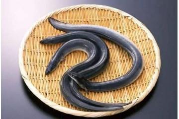 宜春鳗鱼的营养价值及功效与禁忌和做法