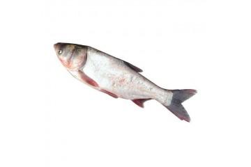 四川夏花鱼苗厂家讲述夏花鱼种混养技术