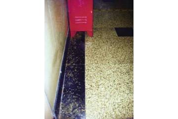 大沥白蚁防治之诱杀法和喷药法的区别