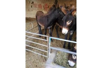宿迁肉驴养殖告诉你养驴能不能只喂青草