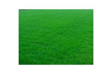 柳州草皮直销公司讲述草坪播种