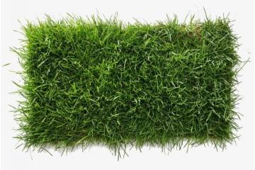 基地草皮种植合作社分析影响草坪的价格因素