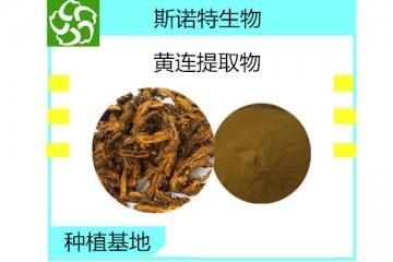 黄连提取物 盐酸小檗碱98%生产厂家包邮