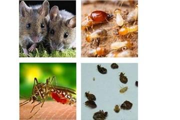 北湖杀虫灭鼠公司之针对农贸市场快速消灭鼠方法