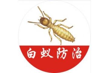 建宁治白蚁之家庭白蚁的防治方法