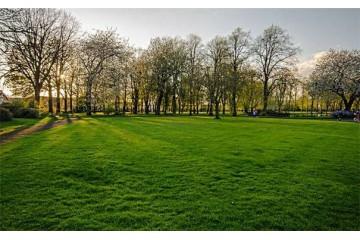 山东草坪批发厂家分析草坪各阶段的养护